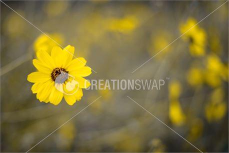 Spring (28738)