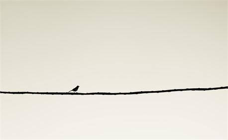 All alone (29215)