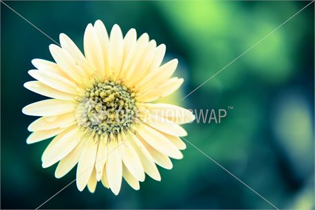 stand alone flower (29905)