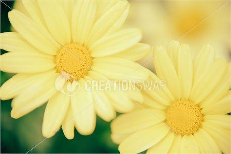 yellow flowers (29927)