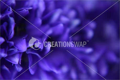 purple flowers (29931)
