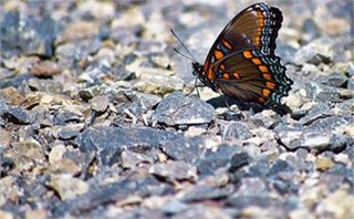 Grounded Butterfly