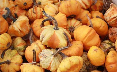 Pumpkins (3872)