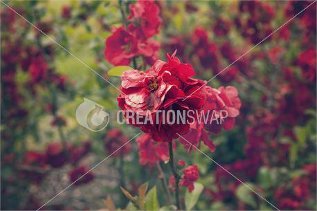 Spring Red Flower (30026)