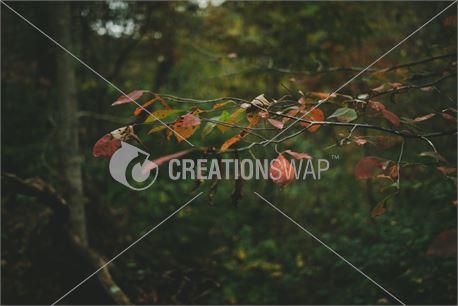 Fall (32248)