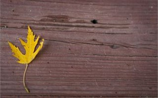 Yellow leaf on wood background