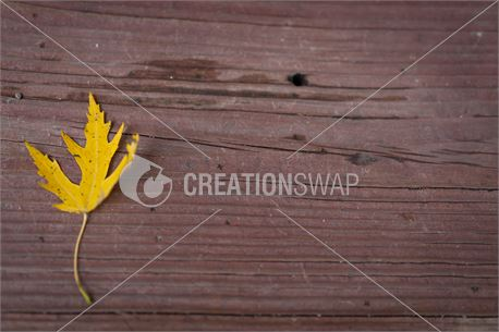 Yellow leaf on wood background (33693)
