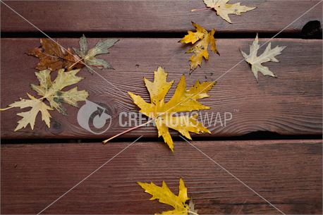 Wet leaves on porch (33695)