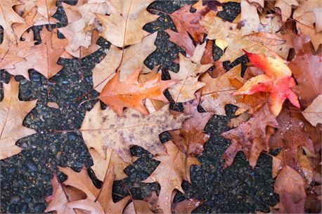 Fall (33795)