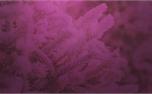 Winter Colors: Loop 2 (34254)