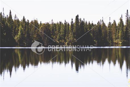 Pine Tree Reflection (34535)