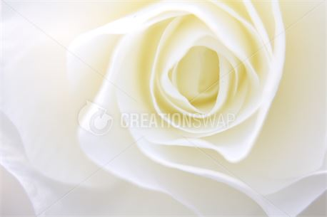 Floral II (34574)