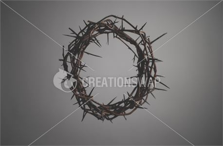 Crown of Thorns (35924)
