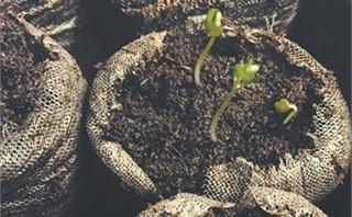 Growing seedling plant