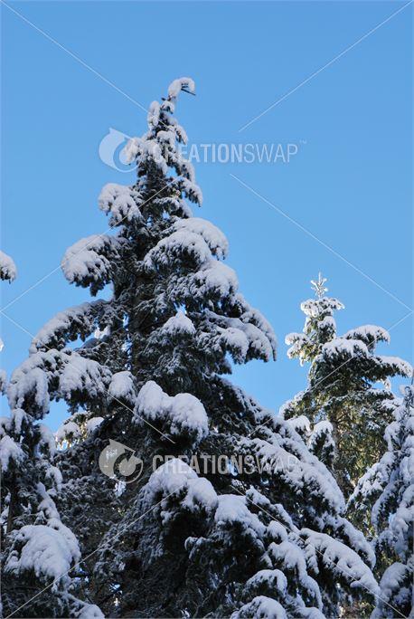 Winter Trees (36687)