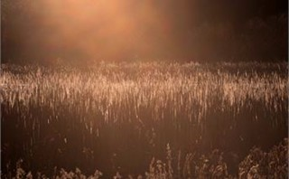 Sunset Over Reeds