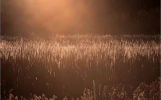 Sunset Over Reeds