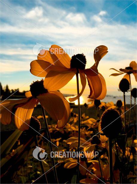 Summer Flowers (36924)