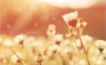 Summer Flowers (39030)