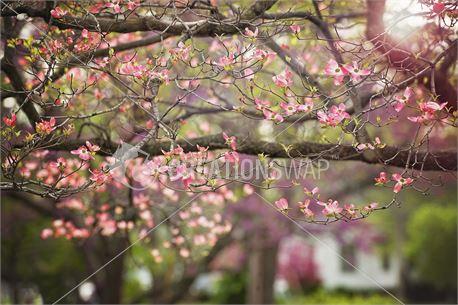 Dogwood Branch (39287)