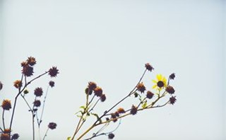 Struggling plant