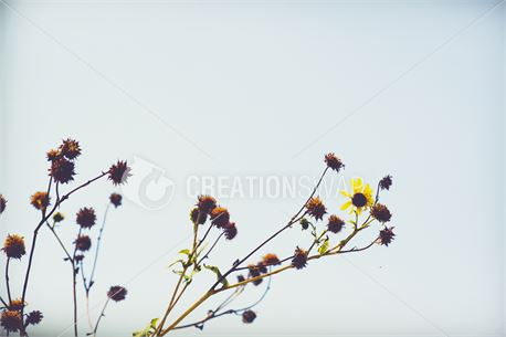 Struggling plant (39687)