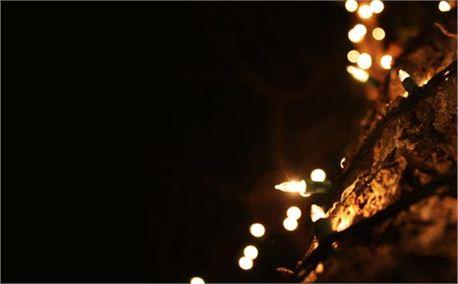 Christmas Lights (4451)