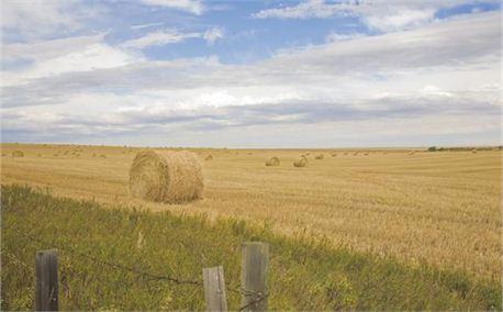 Alberta Harvest (4529)