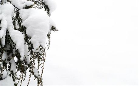 Winter Snow (4542)