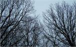Trees (4828)