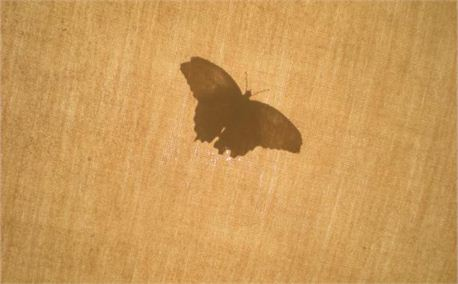 Butterfly Silhouette (4834)