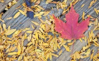 Scattered Fall