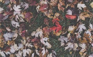 Fall Leaves
