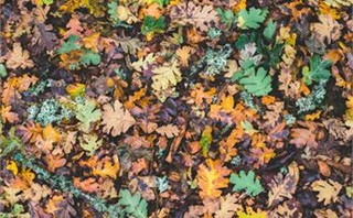 Fall Forest Floor