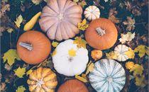 Batch of pumpkins