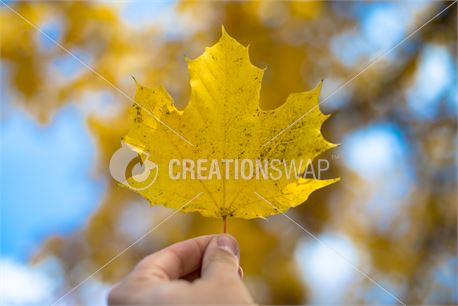 Fall leaf (44238)