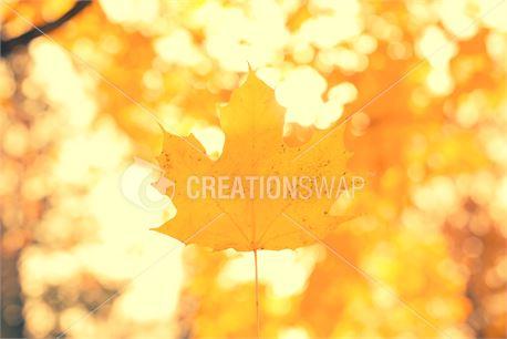 Fall leaf (44239)