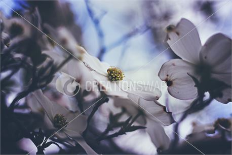 Flowers on tree branches (44439)