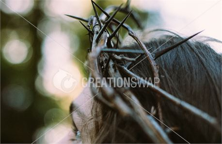 Jesus wearing crown of thorns (48798)