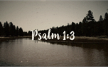 Psalm 1:3 - Rooted (49728)