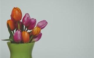 Spring tulips in a vase