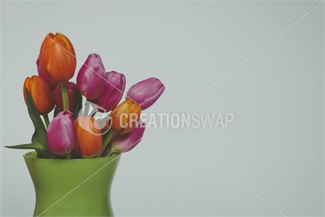 Spring tulips in a vase (49780)