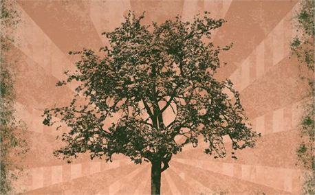 Sunsplash Tree (5080)