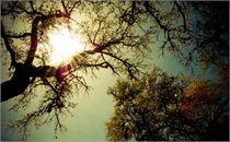Tree Study_A