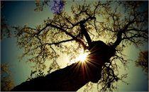 Tree Study_B