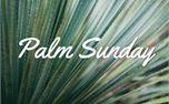 Palm Sunday (50338)
