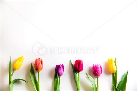 Tulip Frame (50739)