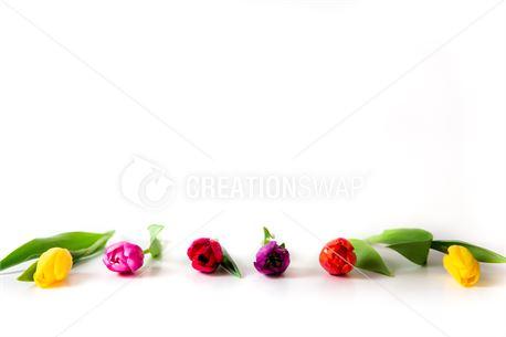 Tulip Frame 2 (50740)