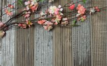 Cherry Blossoms on Old Wood