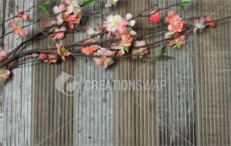 Cherry Blossoms on Old Wood (50831)